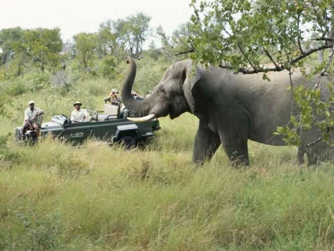elephant afrique